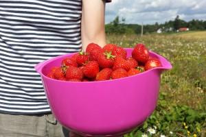 jordbærplante i have
