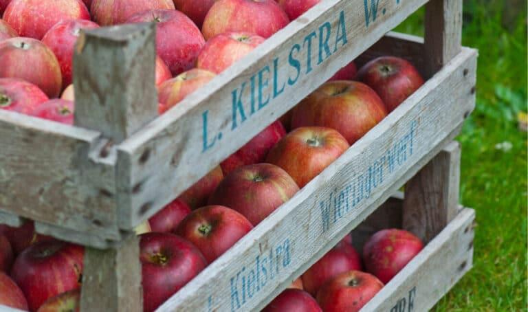 høst af æbler