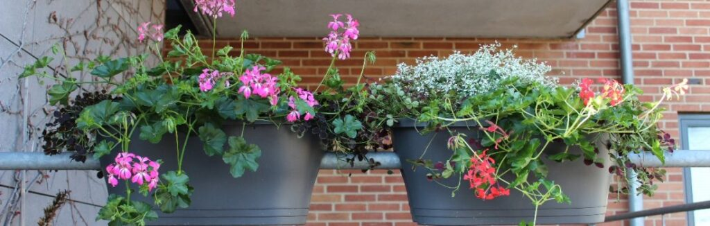 blomster til altan