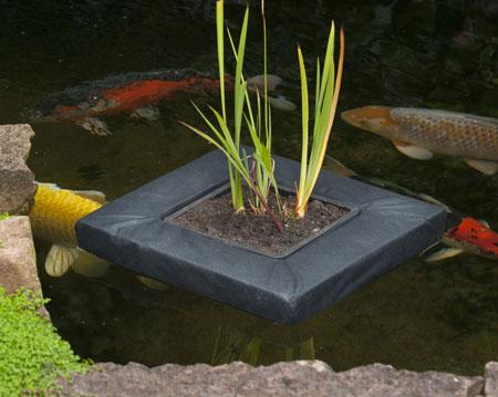 vandplante aalborg