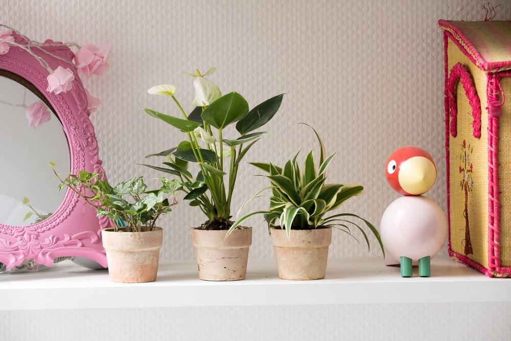 luftrensende plante